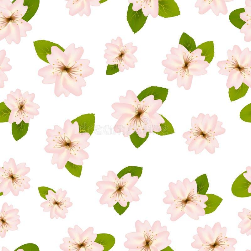 Wiosen Czere?niowi okwitni?cia ?Bezszwowy wz?r z Japanese?Sakura kwiaty r??owego bia?e t?o Romantic royalty ilustracja