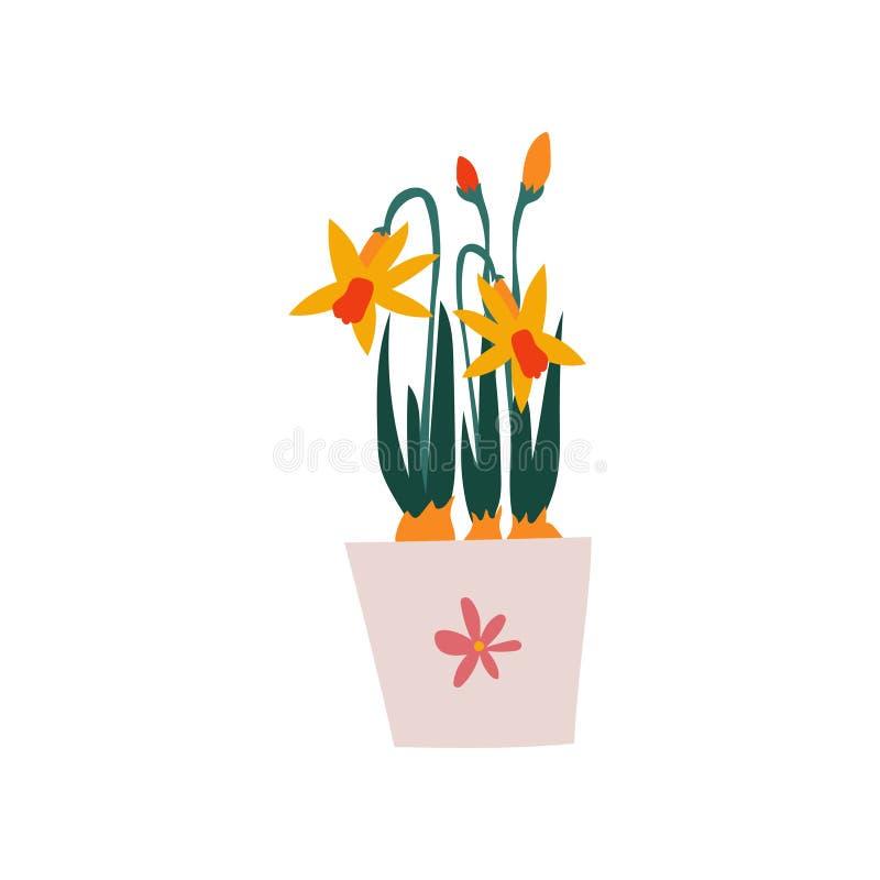 Wiosen Daffodils Kwitną w Flowerpot, Piękna Doniczkowa roślina wektoru ilustracja ilustracji