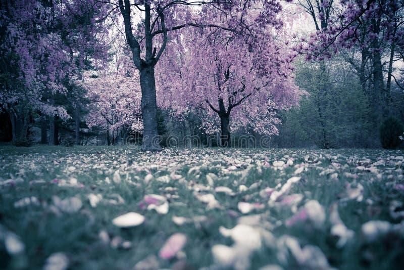 Wiosen drzewa fotografia royalty free