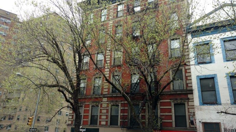 Wiosen drzewa w mieście zdjęcie stock