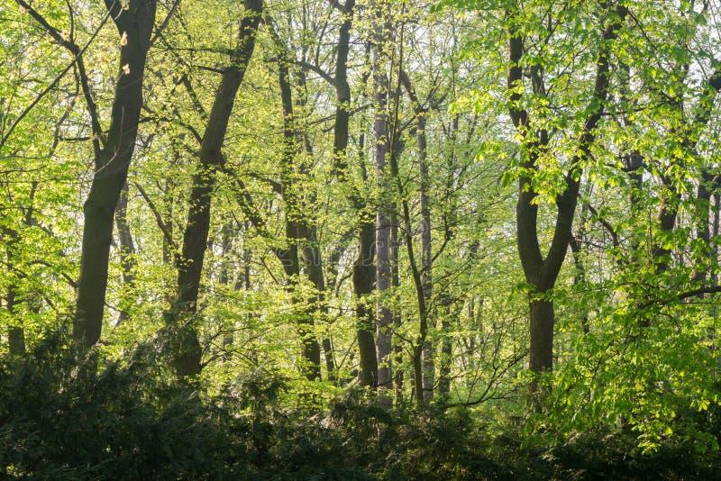 Wiosen drzewa w parku na słonecznym dniu zdjęcie royalty free