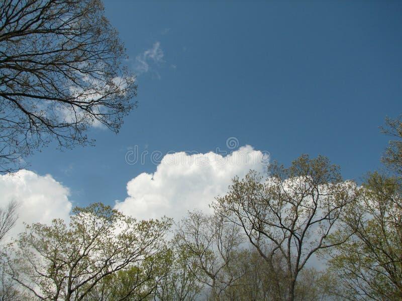 Wiosen drzewa z chmurami zdjęcie royalty free