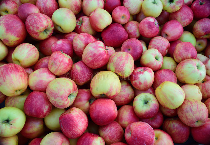 Wiosen jabłka obrazy stock