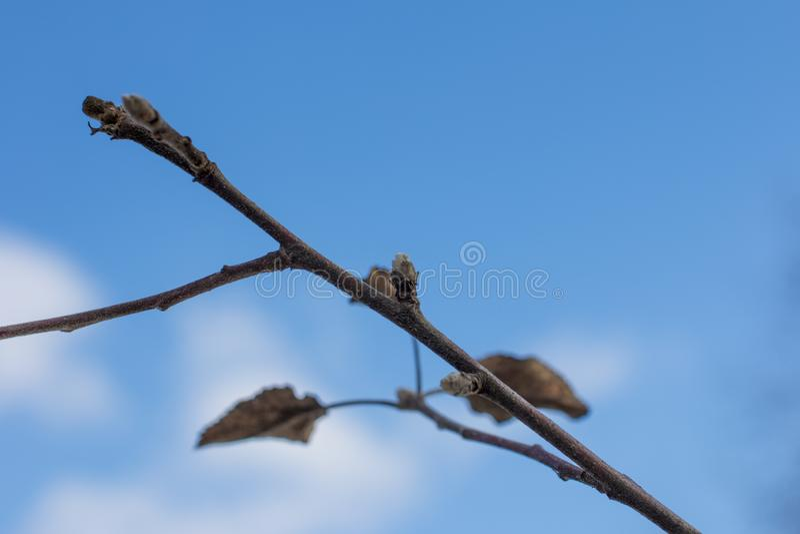 Wiosen kwiatonośni drzewa fotografia royalty free