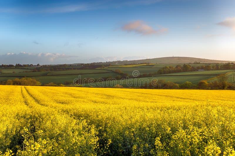 Wiosen pola przy Callington w Cornwall fotografia royalty free