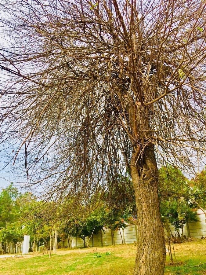 Wiosen season's drzew piękno obraz stock