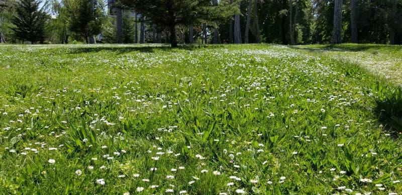 Wiosen Wildflowers W Oakland Kalifornia zdjęcia royalty free