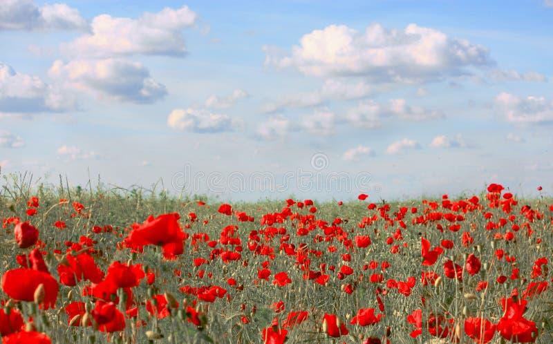 Wiosenne łąki z makami i niebieskim niebem zdjęcie royalty free