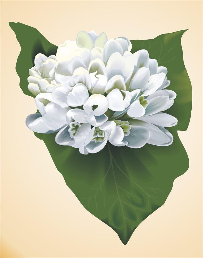 wiosenne śnieżyczki bukiet kwiatów urs ilustracja wektor