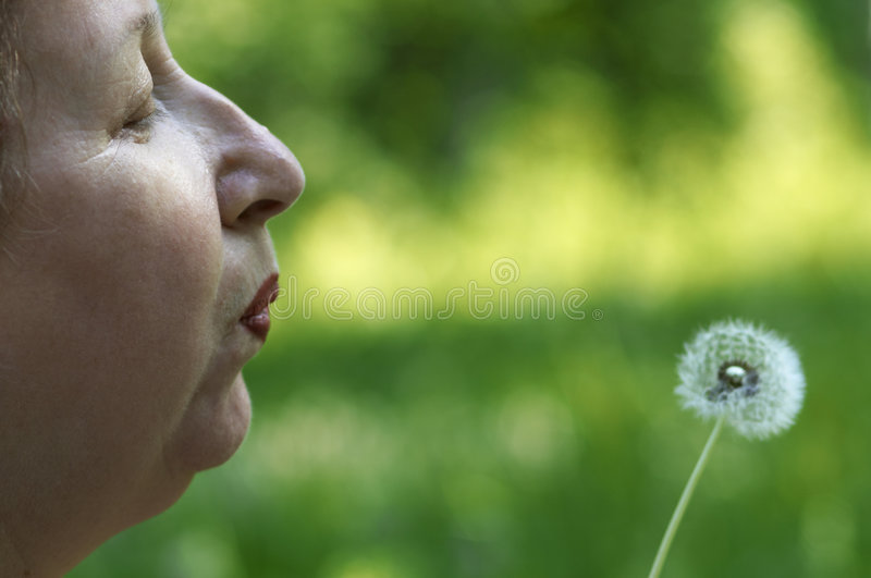 wiosenne życzenie zdjęcie royalty free
