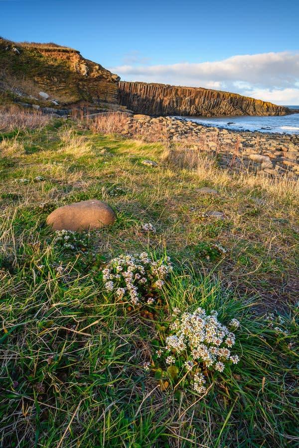 Wiosenne kwiaty w pobliżu Cullernos Point zdjęcia stock