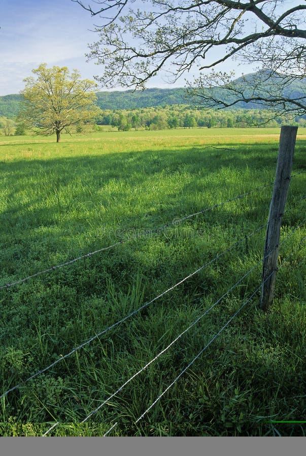wiosenne płotu drzewo. obrazy stock