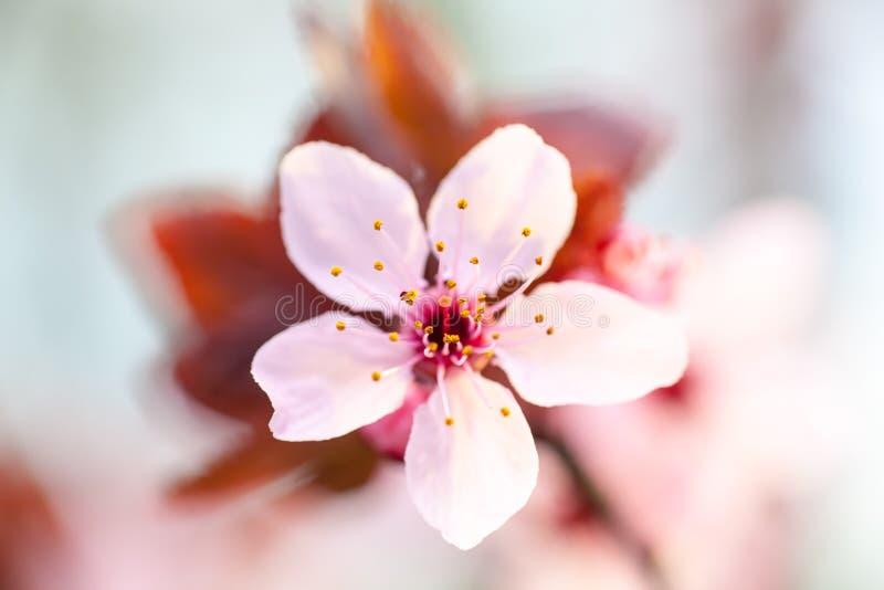 wiosenne tła piękna ilustracyjny wektora zdjęcie royalty free