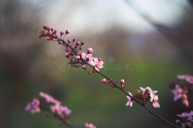 wiosenne tła piękna ilustracyjny wektora zdjęcia royalty free