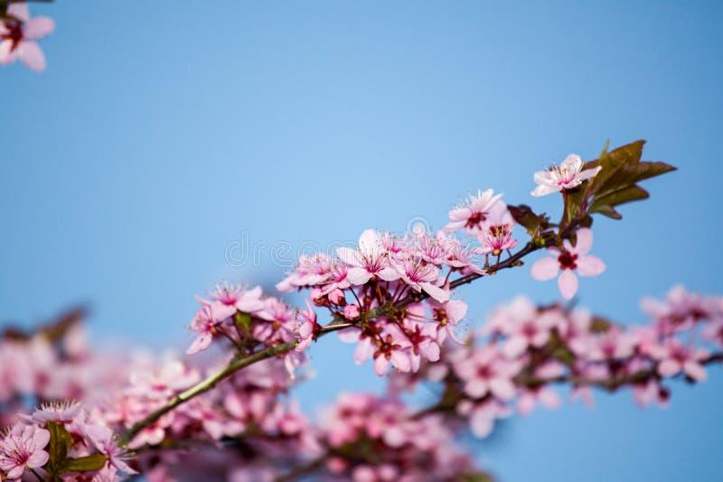 wiosenne tła piękna ilustracyjny wektora obrazy royalty free