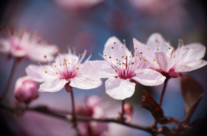 wiosenne tła piękna ilustracyjny wektora obrazy stock
