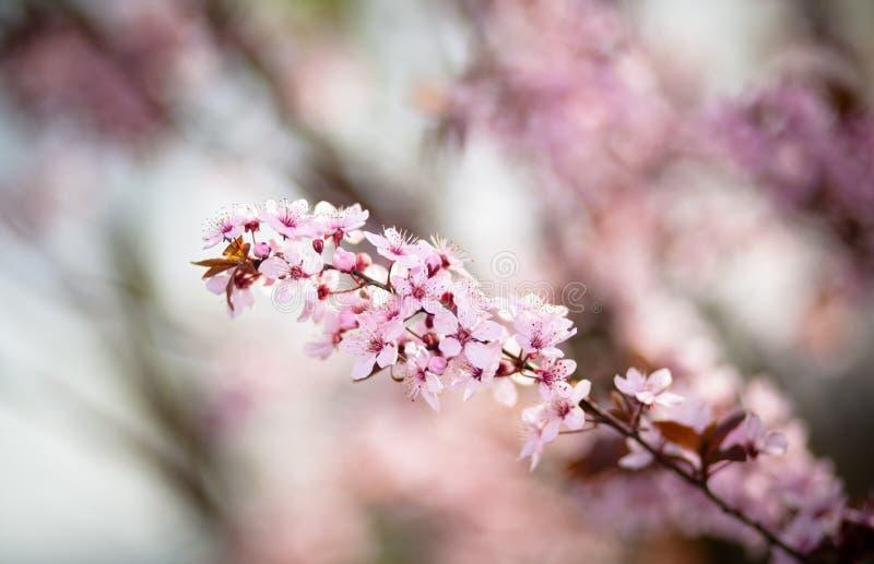 wiosenne tła piękna ilustracyjny wektora zdjęcie stock