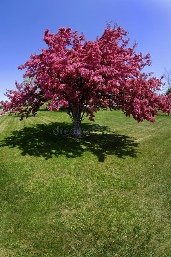 wiosenny kwiat drzewo. fotografia royalty free