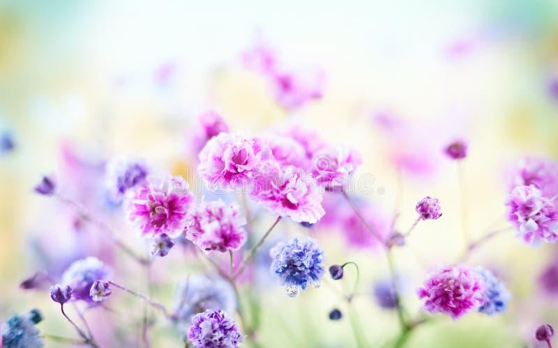 wiosenny lata kwiecisty tło Kwitnący kolorowi mali kwiaty zdjęcia royalty free