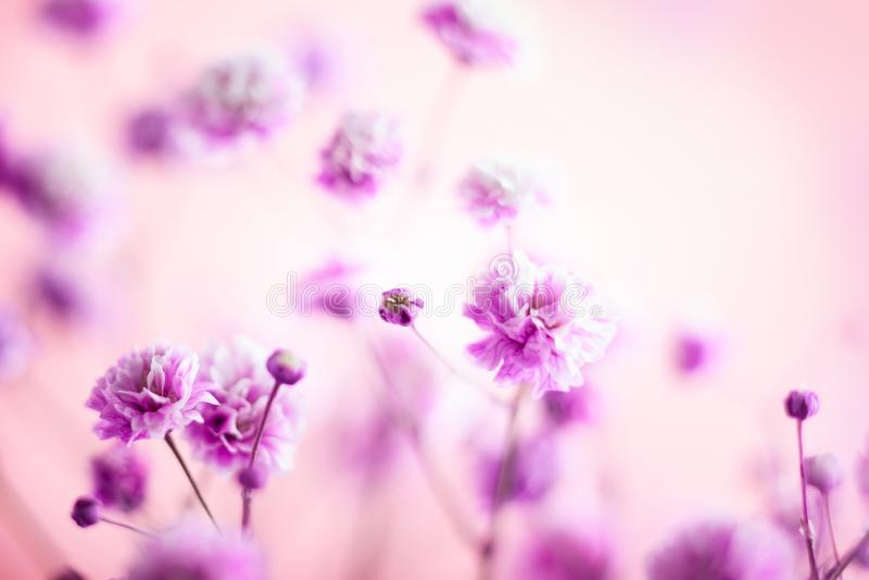 wiosenny lata kwiecisty tło Kwitnący lili mali kwiaty obrazy stock