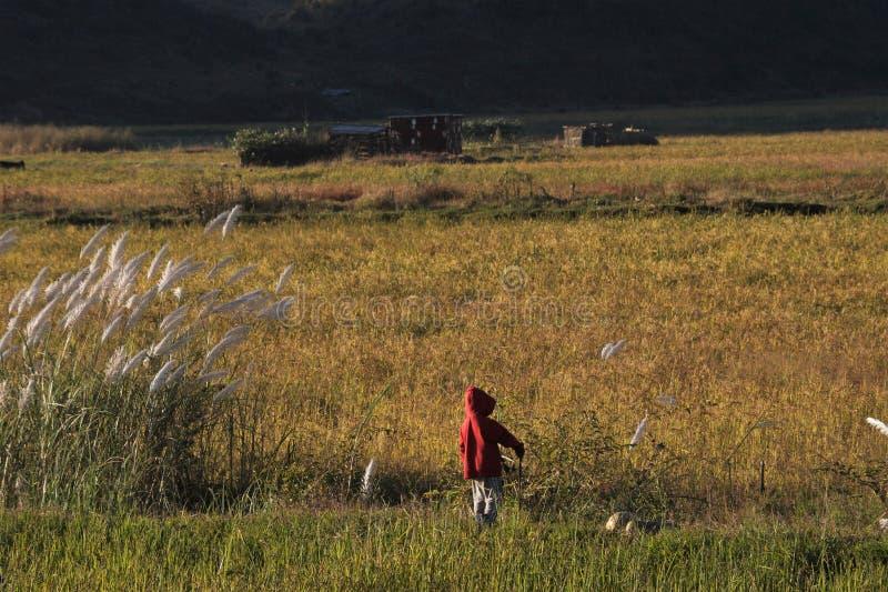 wioska dzieciak obrazy royalty free