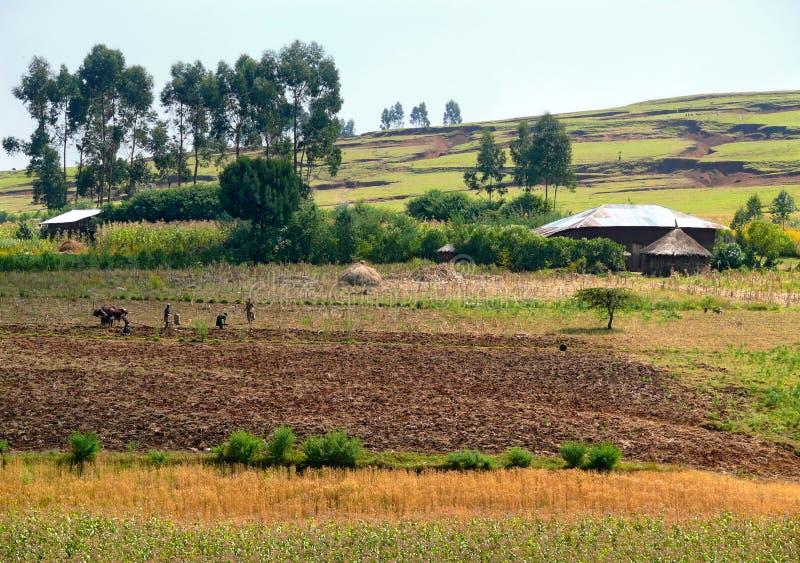 Wioska Finote Silam. Rolnictwo. Ludzie pracuje w polu. zdjęcie stock