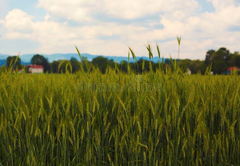 Wioska krajobraz w wiośnie zdjęcia royalty free