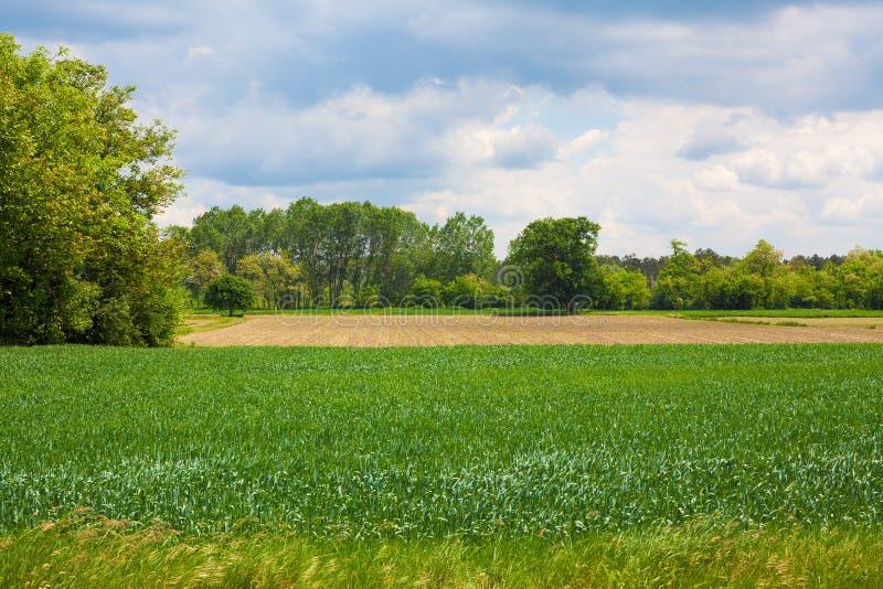 Wioska krajobraz w wiośnie obraz stock