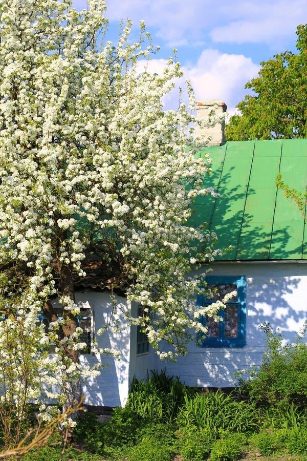 Wioska ukraiński dom zdjęcie royalty free