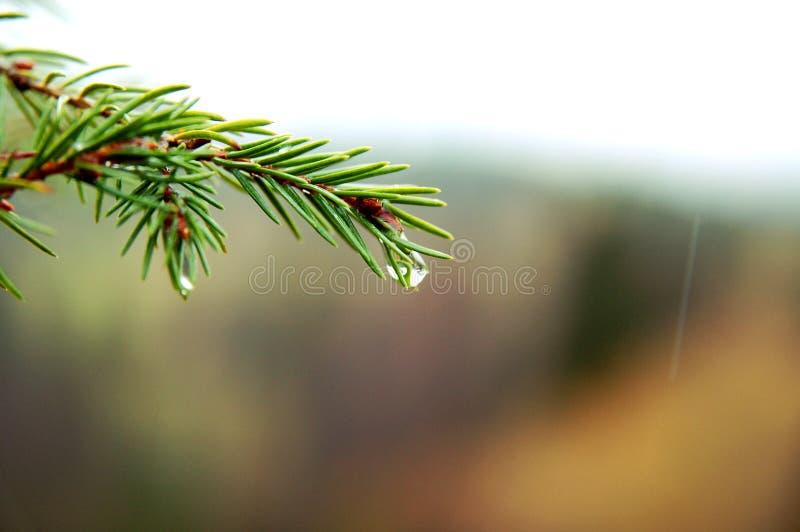 Download Wiosna obraz stock. Obraz złożonej z pokojowy, deszcz - 13329273