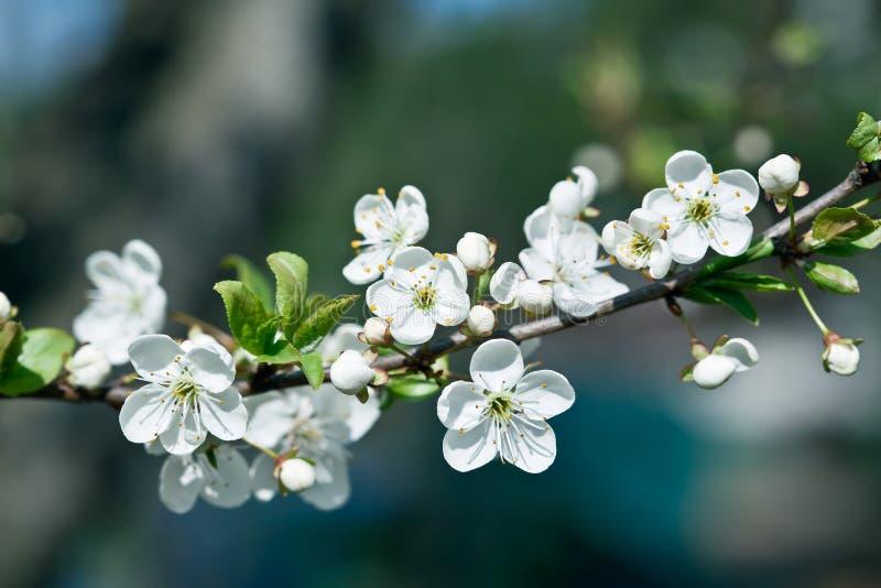 wiosna zdjęcia stock