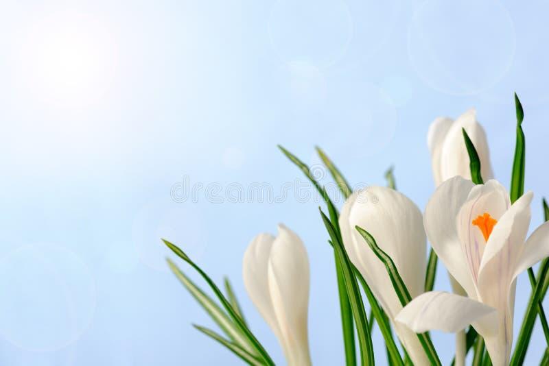 Download Wiosna obraz stock. Obraz złożonej z niebo, kopia, horyzontalny - 28954881