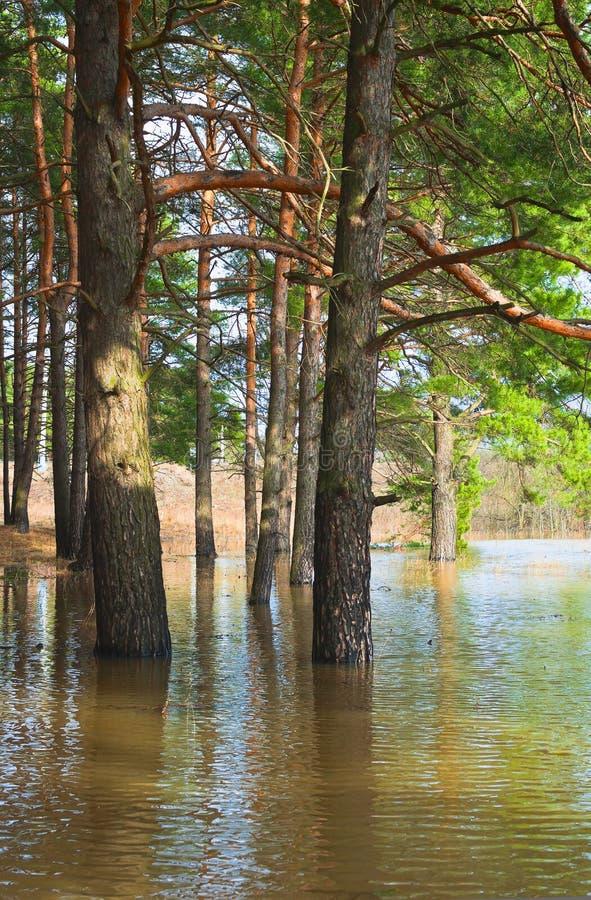 Download Wiosna zdjęcie stock. Obraz złożonej z jezioro, naturalny - 28960186