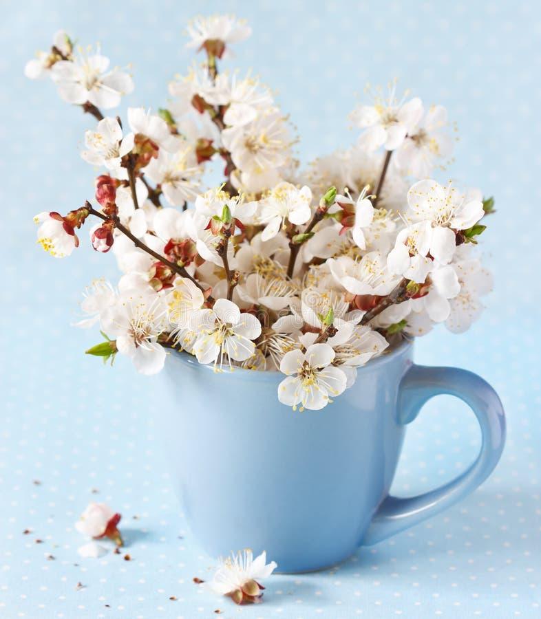 Wiosna. zdjęcie royalty free