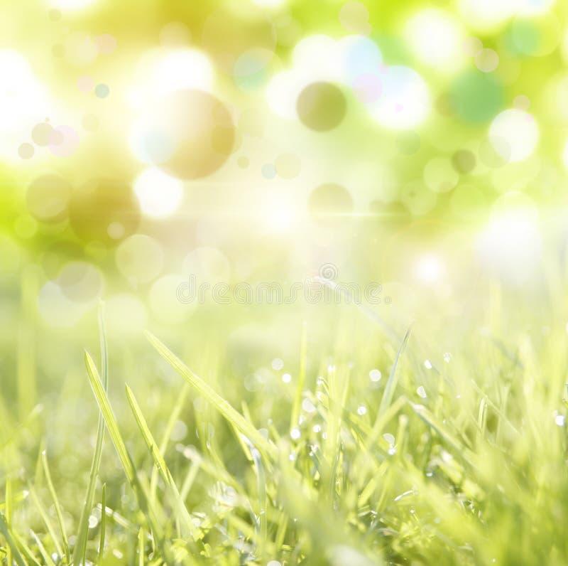 Download Wiosna zdjęcie stock. Obraz złożonej z gazon, tło, ulistnienie - 41952850