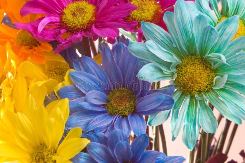 Wiosna! zdjęcie royalty free
