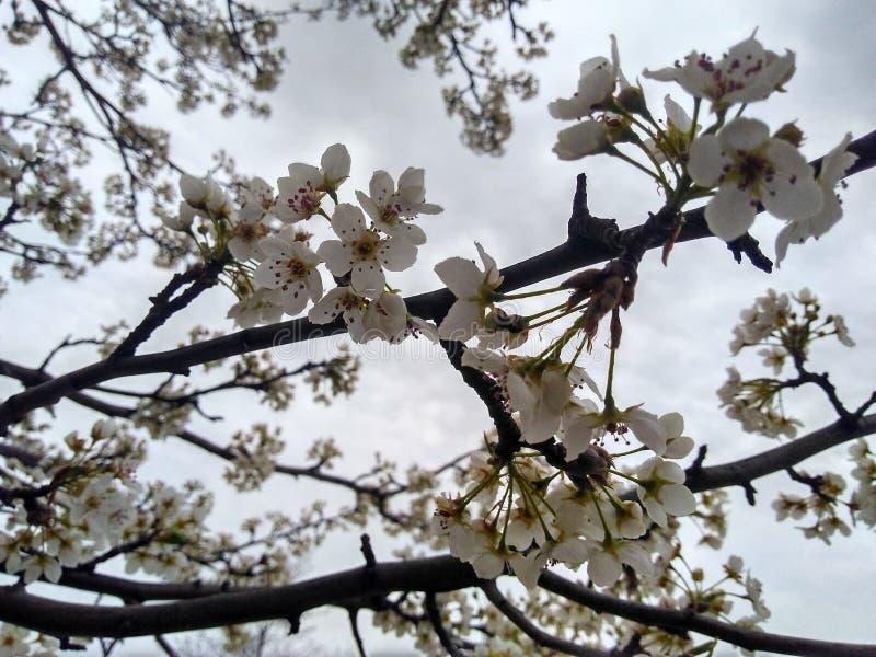 Wiosna zdjęcie stock