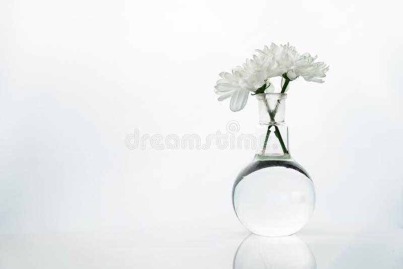 Wiosna biały kwiat w szklanej round nauki medyczne laboratorium kolbie obraz royalty free