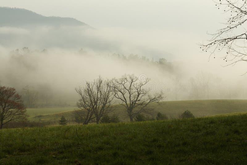 Wiosna, Cades zatoczka, Wielki Dymiący Mtns NP obraz stock