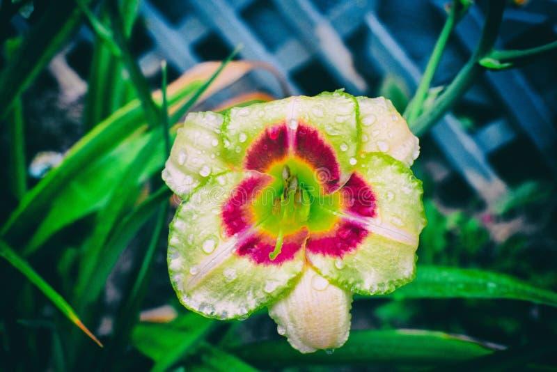 Wiosna czas… wzrastał liście, naturalny tło obrazy stock
