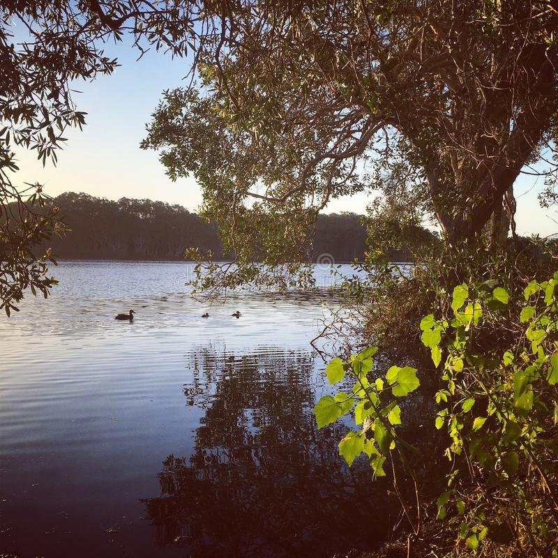 Wiosna czas przy jeziorem fotografia stock