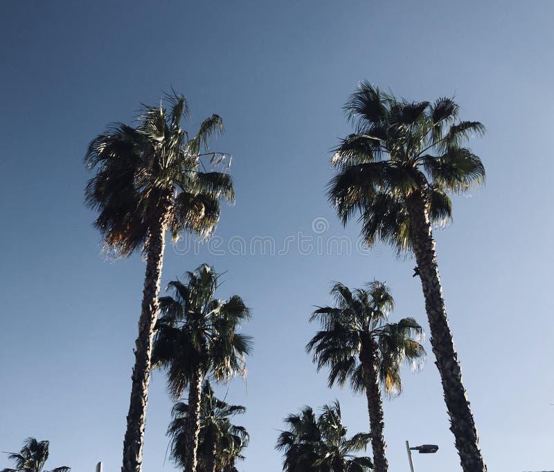 Wiosna czas w Malaga Spain chmurach i palmach zdjęcie royalty free