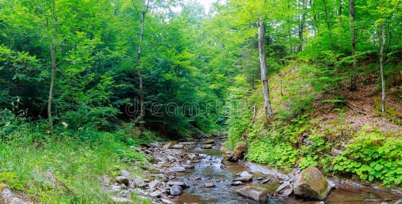 Wiosna czas wzdłuż Małej Gołębiej rzeki w zdjęcia stock