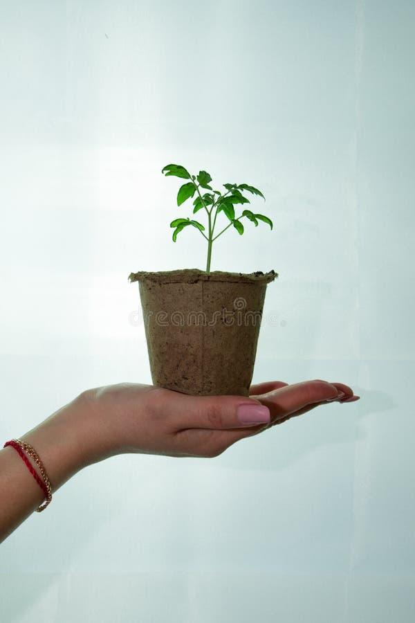 Wiosna czas zasadzać drzewa i rośliny zdjęcie stock