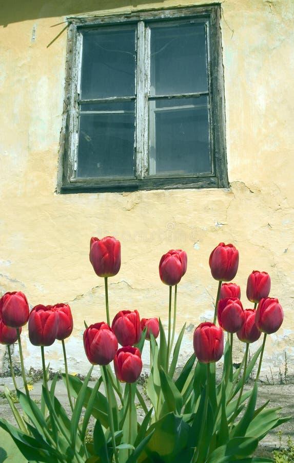 wiosna czuwanie czasu zdjęcie royalty free