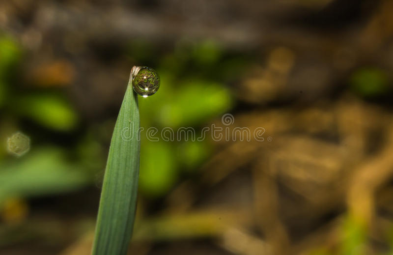 Wiosna deszcz zdjęcia stock