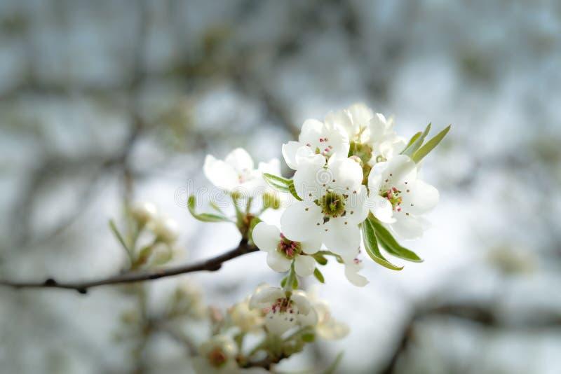 Wiosna goniec zdjęcie stock
