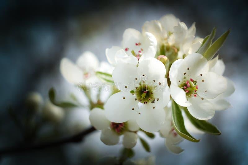Wiosna goniec obrazy stock