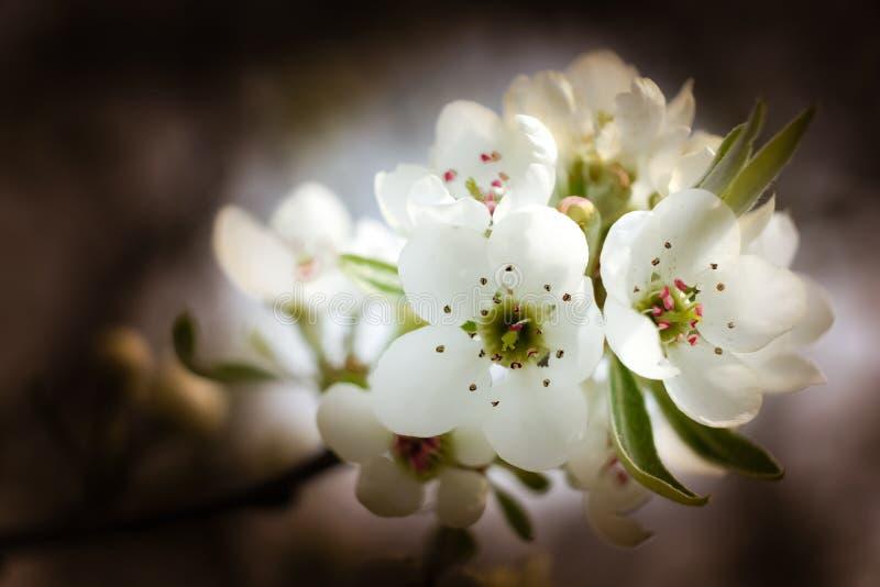 Wiosna goniec obraz stock