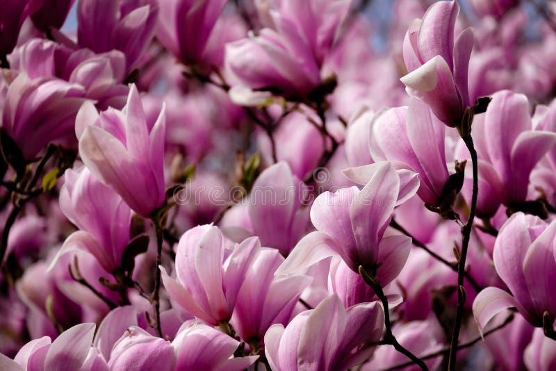 Wiosna goniec zdjęcie royalty free